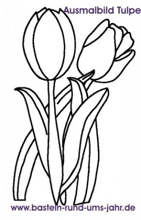 Ausmalbild Tulpe für Kinder.