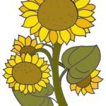 Sonnenblumen zum Ausmalen.