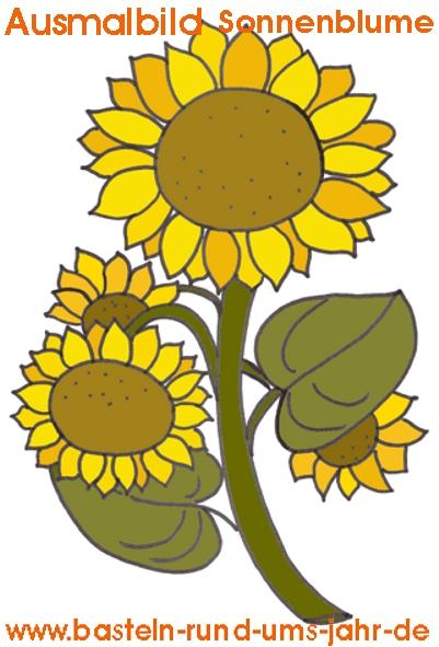 Ausmalbild Sonnenblume Basteln Rund Ums Jahr